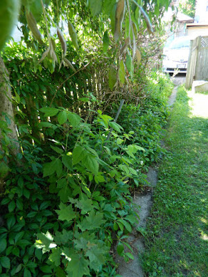 Riverdale Toronto back yard garden clean up before by Paul Jung Gardening Services