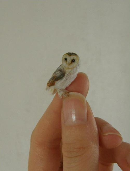 my owl barn  anya stone