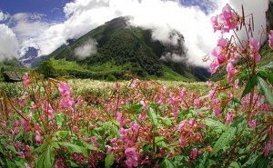 7 wonders of the world Valley of Flowers in the Himalayas