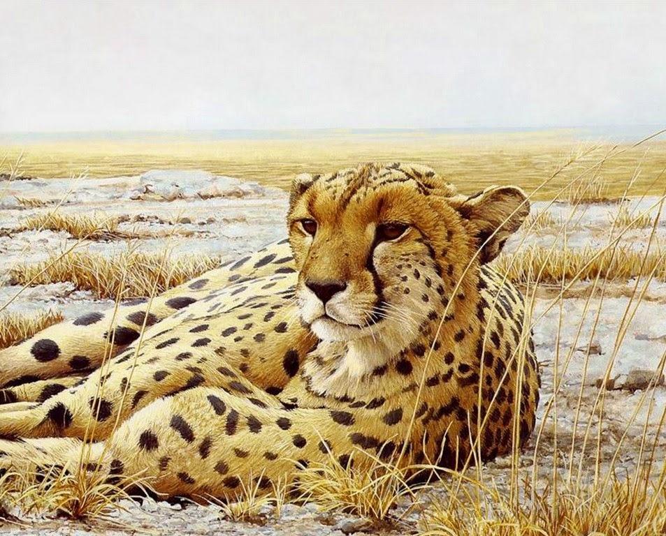 paisajes-con-animales