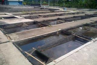 cara budidaya ikan mujair di kolam terpal,mujair di kolam tembok,gurame di kolam terpal dan beton,patin di kolam terpal,gabus di kolam terpal,nila di kolam terpal,gurame di kolam terpal,ikan lele,