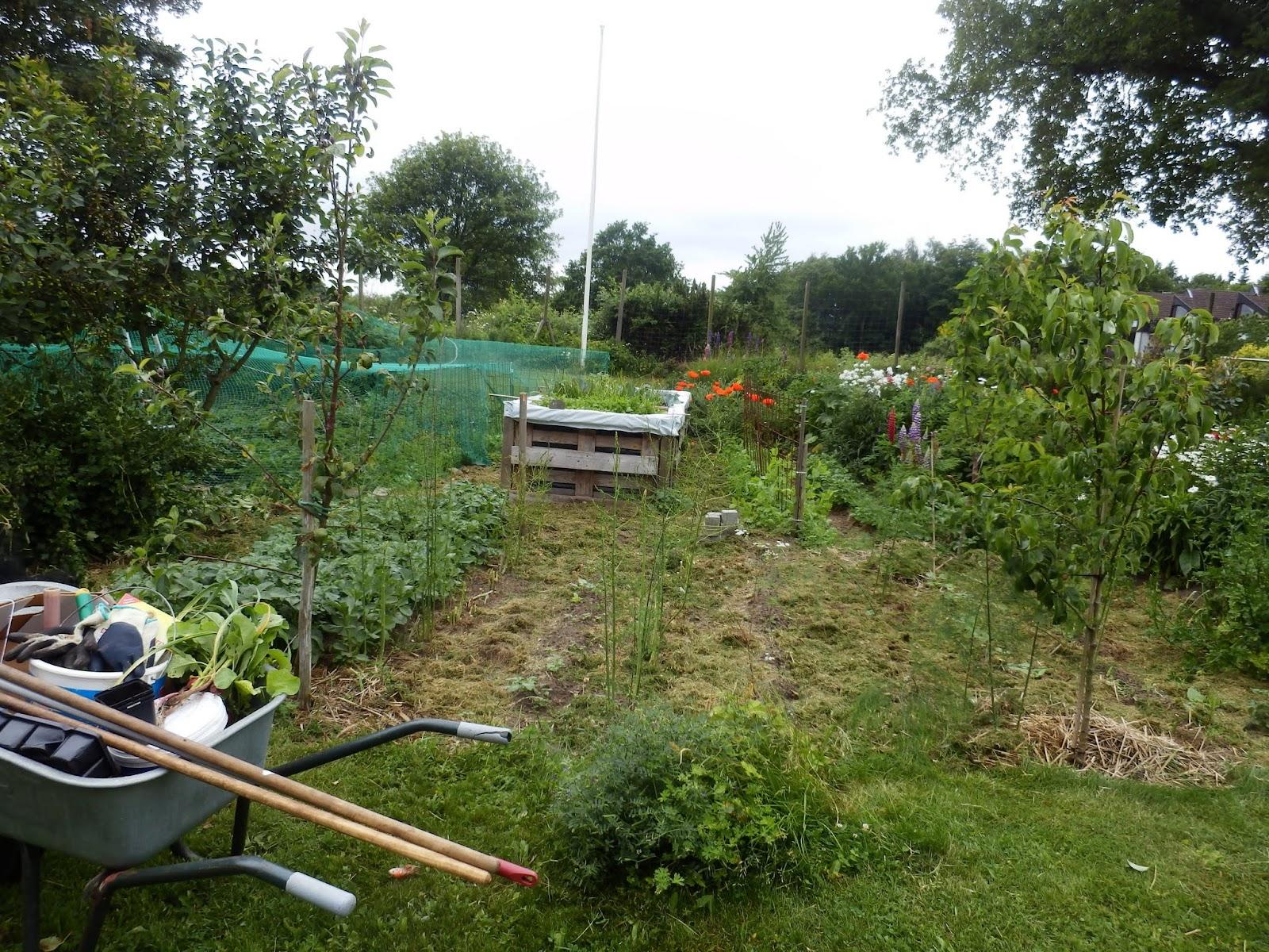 hochbeet bepflanzen erdbeeren garten design ideen um. Black Bedroom Furniture Sets. Home Design Ideas