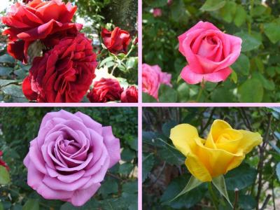 ARTE Y JARDINERÍA DISEÑO DE JARDINES: Rosas. Las reinas del color ...