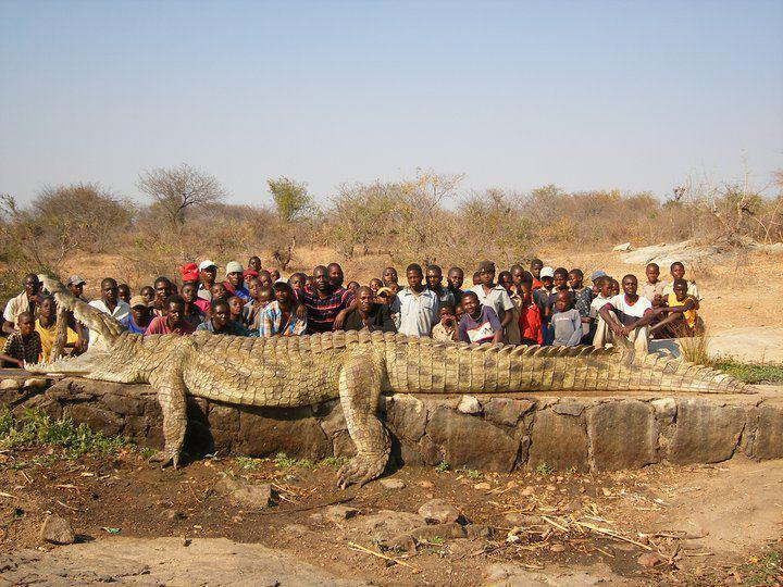The Biggest Crocodile In The World