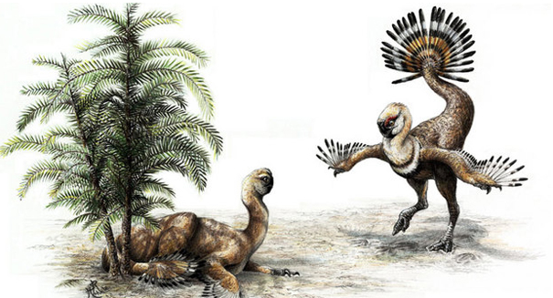 Dinosaur picture, evolution, dinosaur, bird, feather