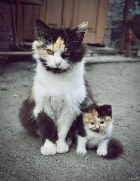 Мамы и их детки