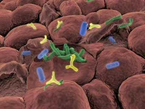 Can probiotics help infant constipation medicine