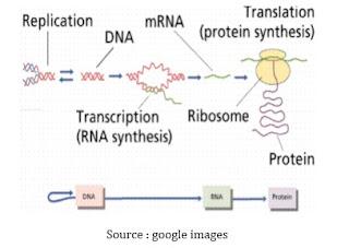 Proses Metabolisme (Sintesis) Protein dan Asam Amino