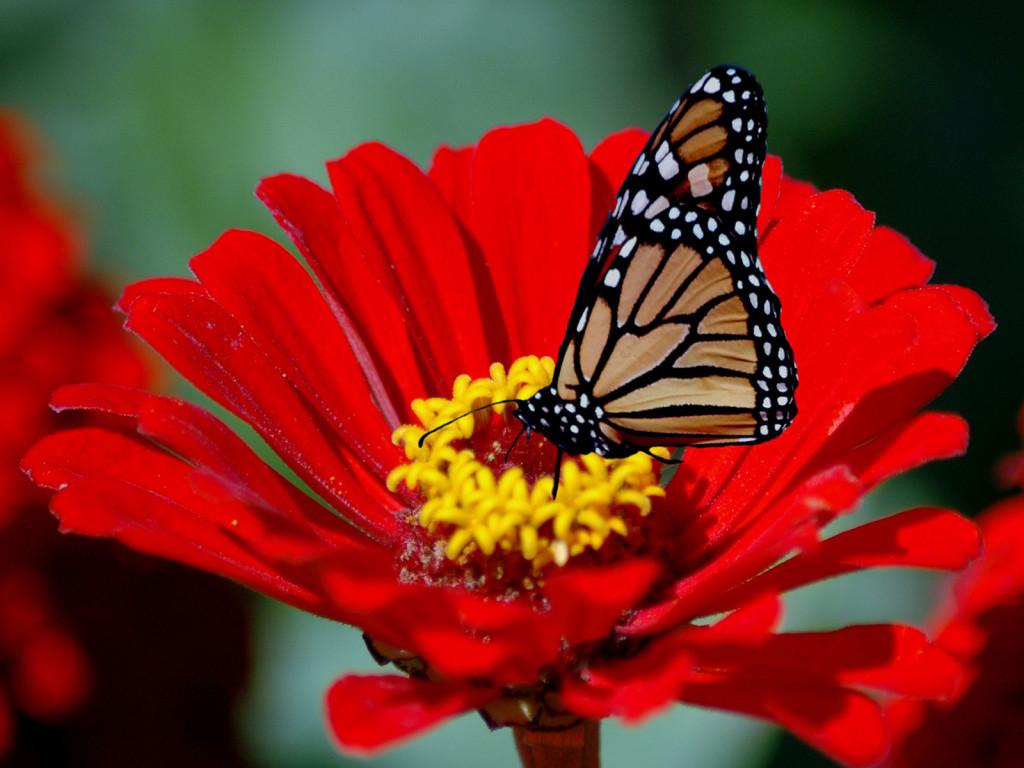 Beautiful Flowers Live Wallpaper Free Download Many Hd Wallpaper