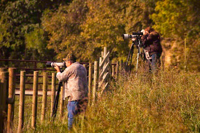 Elk photographers in Boxley Valley near Ponca, AR