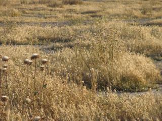 Huerta en secano Aliagar Zuera Zaragoza campo de golf