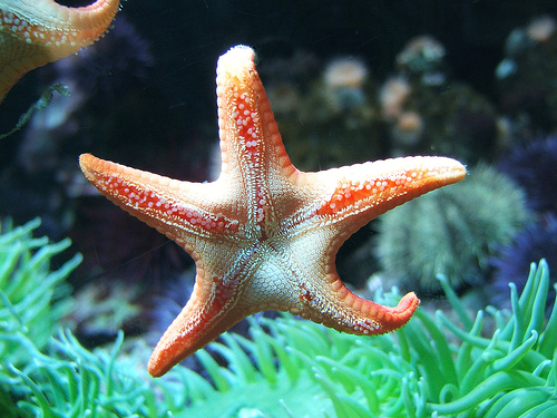 amazing african animals amazing stars and starfish