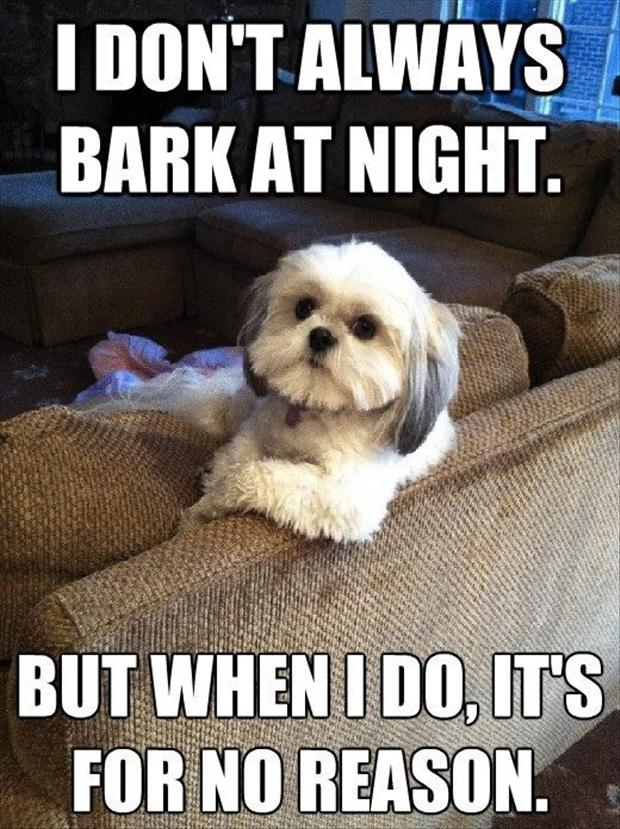Dogs Funny Pics With Captions