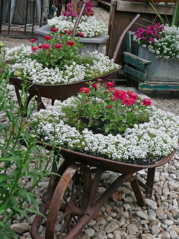 plantas de jardim lista:Depósito Santa Mariah: Flores Do Jardim!