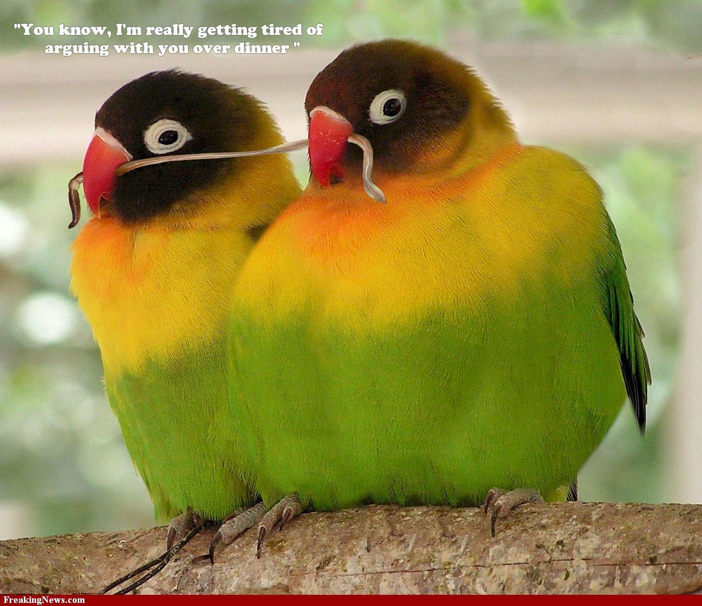 Great Wallpaper Love Bird - lovebirds_beautifulbirds_picturespool_04  Trends_479285.jpg