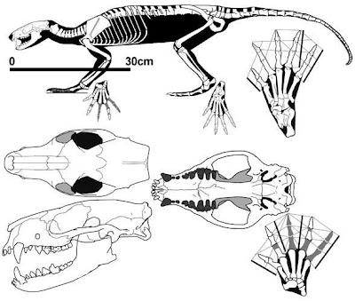 canidae fosil Vulpavus