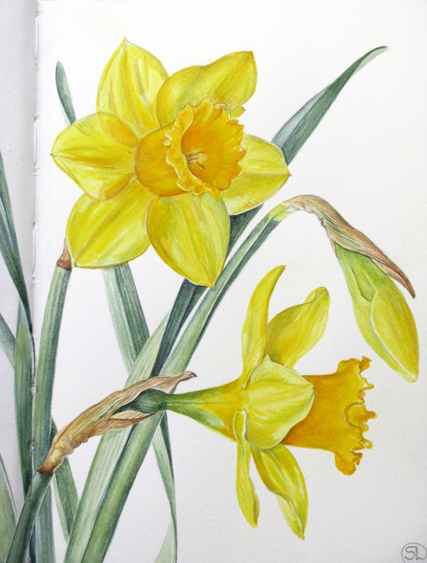 Daffodil White Paint Colour