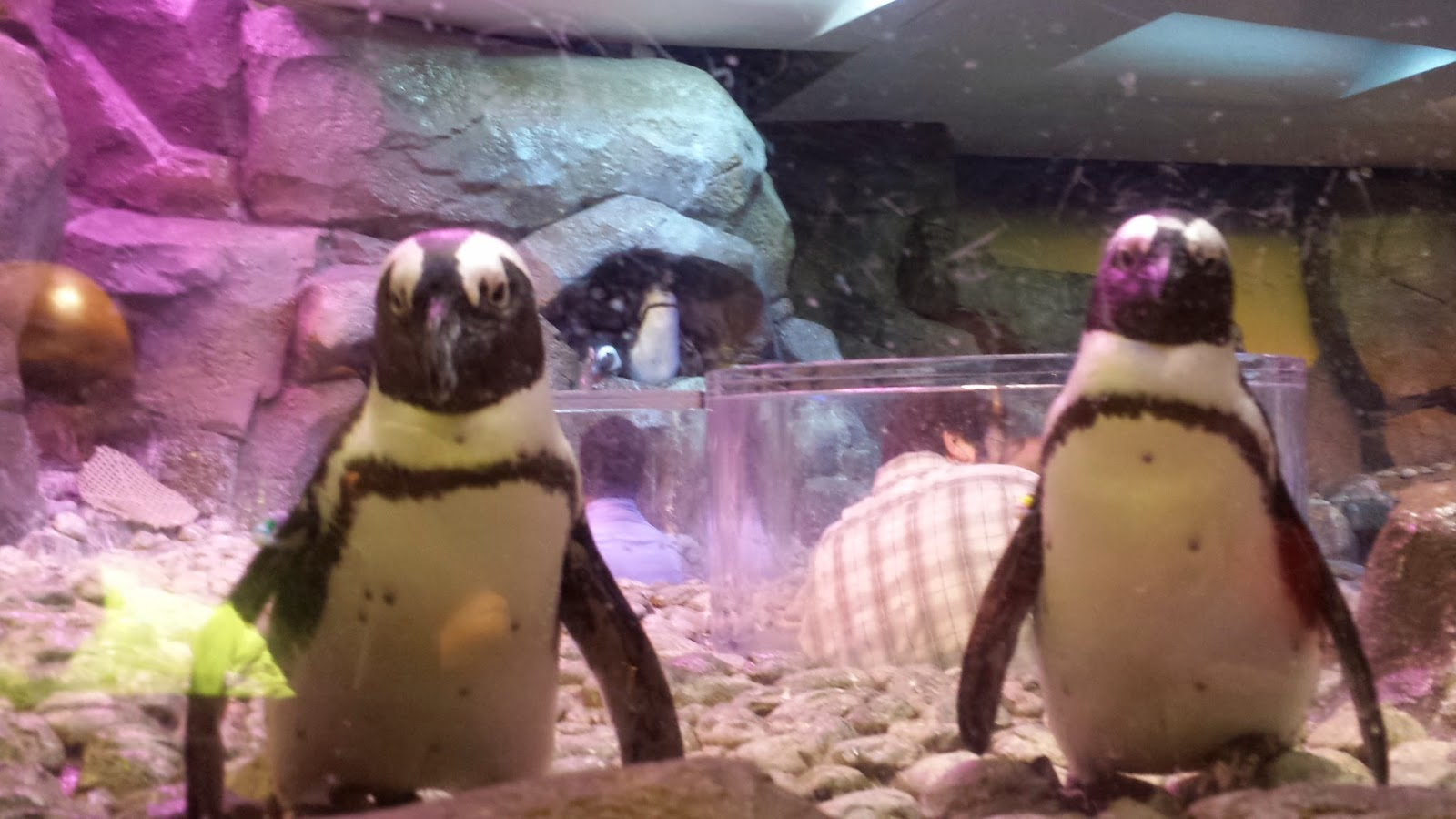 Click here for GA Aquarium interactive videos