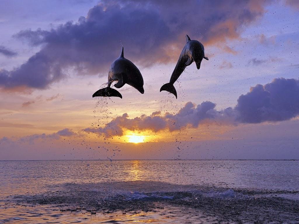 "<img src=""http://1.bp.blogspot.com/-pCejimK_Ui4/UtpAJaG4z3I/AAAAAAAAIwI/ZXGiAtoq1yI/s1600/amazing-flying-dolphins.jpeg"" alt=""amazing flaying dolphins"" />"