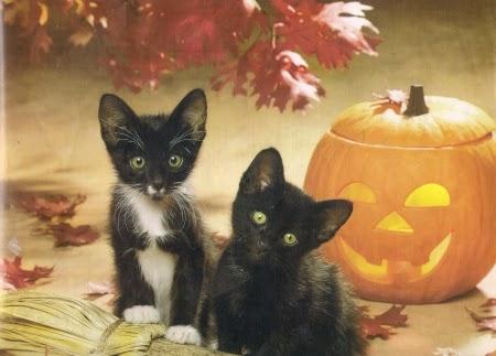 Funny halloween animals 17
