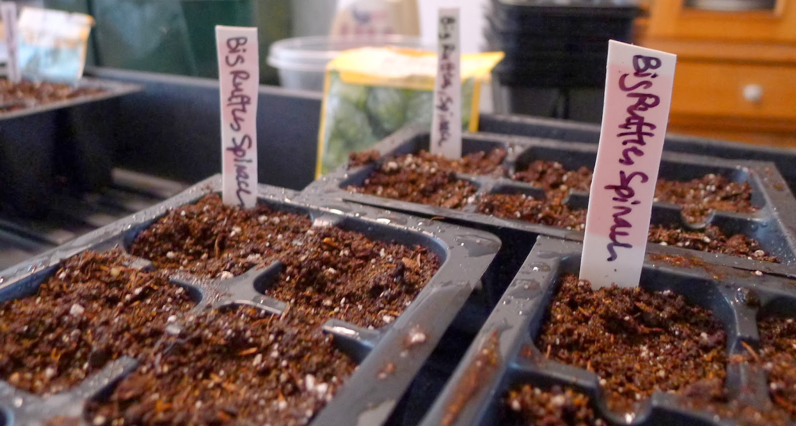 growth stages of strawberry spinach