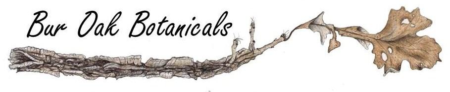 Bur Oak Botanicals
