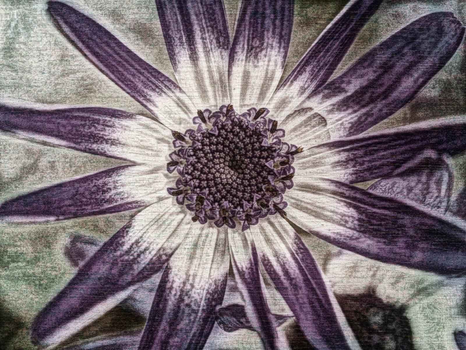 flower photo edited using Grunge