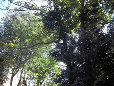 Florestas, árvores, cidades