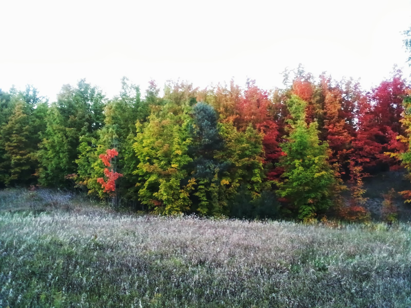 Traverse City Young Professionals: Fall Color Tour in Traverse City ...