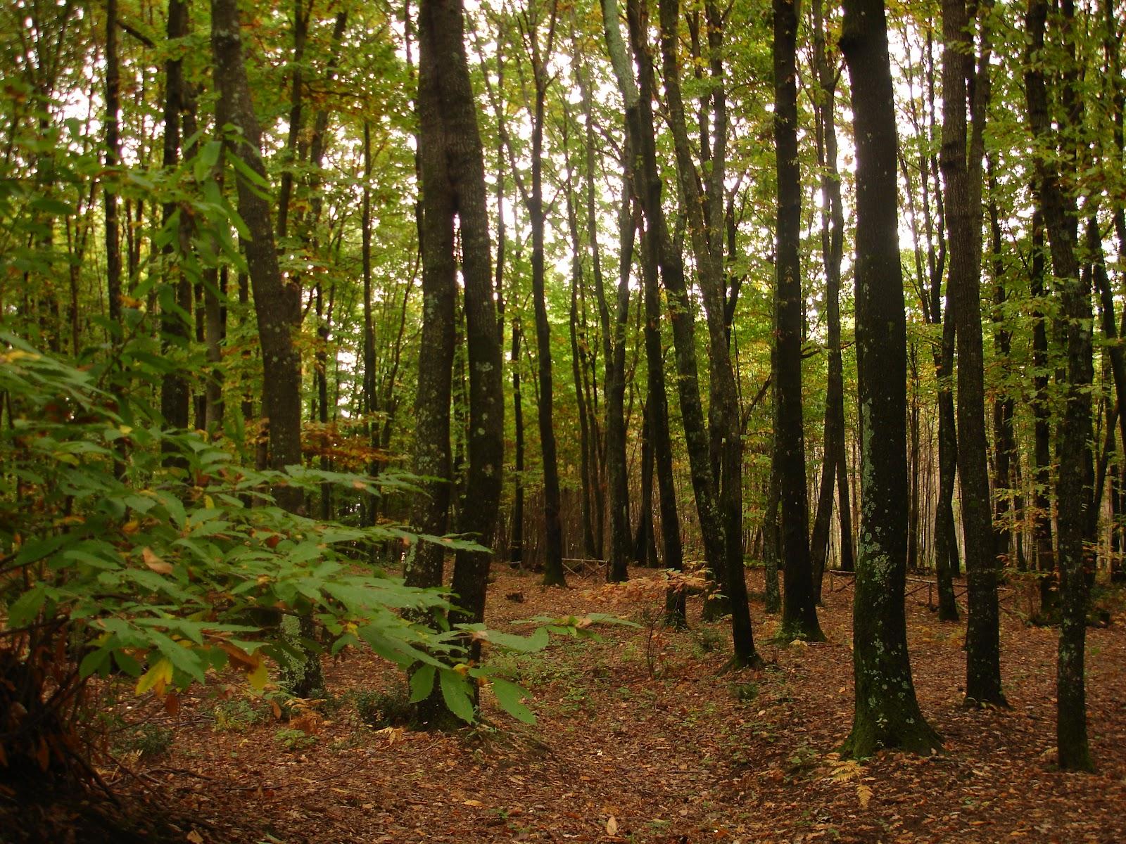 Naturamediterraneensis dalla teoria alla pratica for Cabina innevata nei boschi
