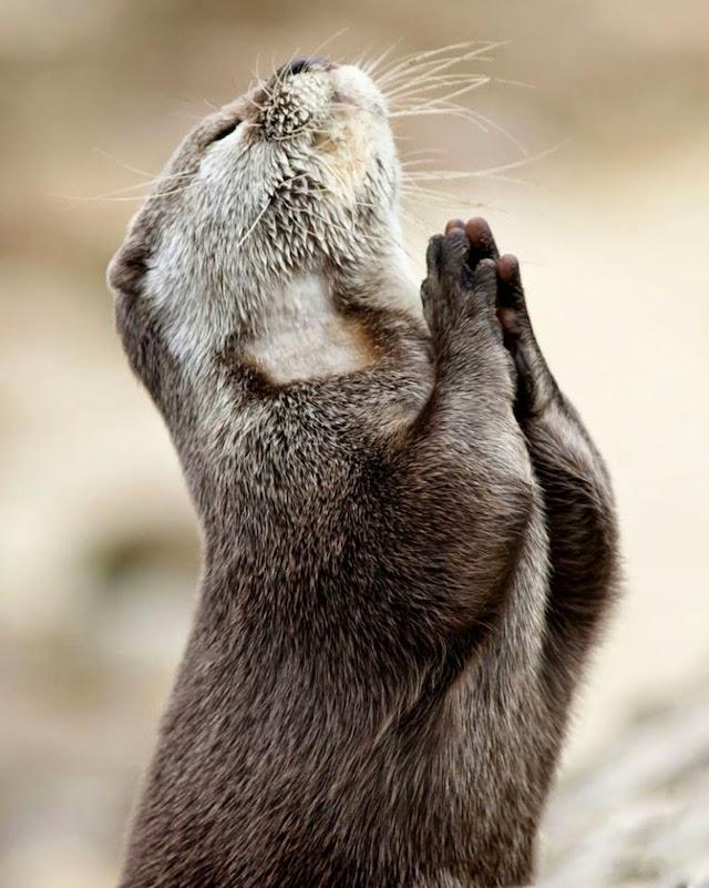 ardilla rezando por su almuerzo
