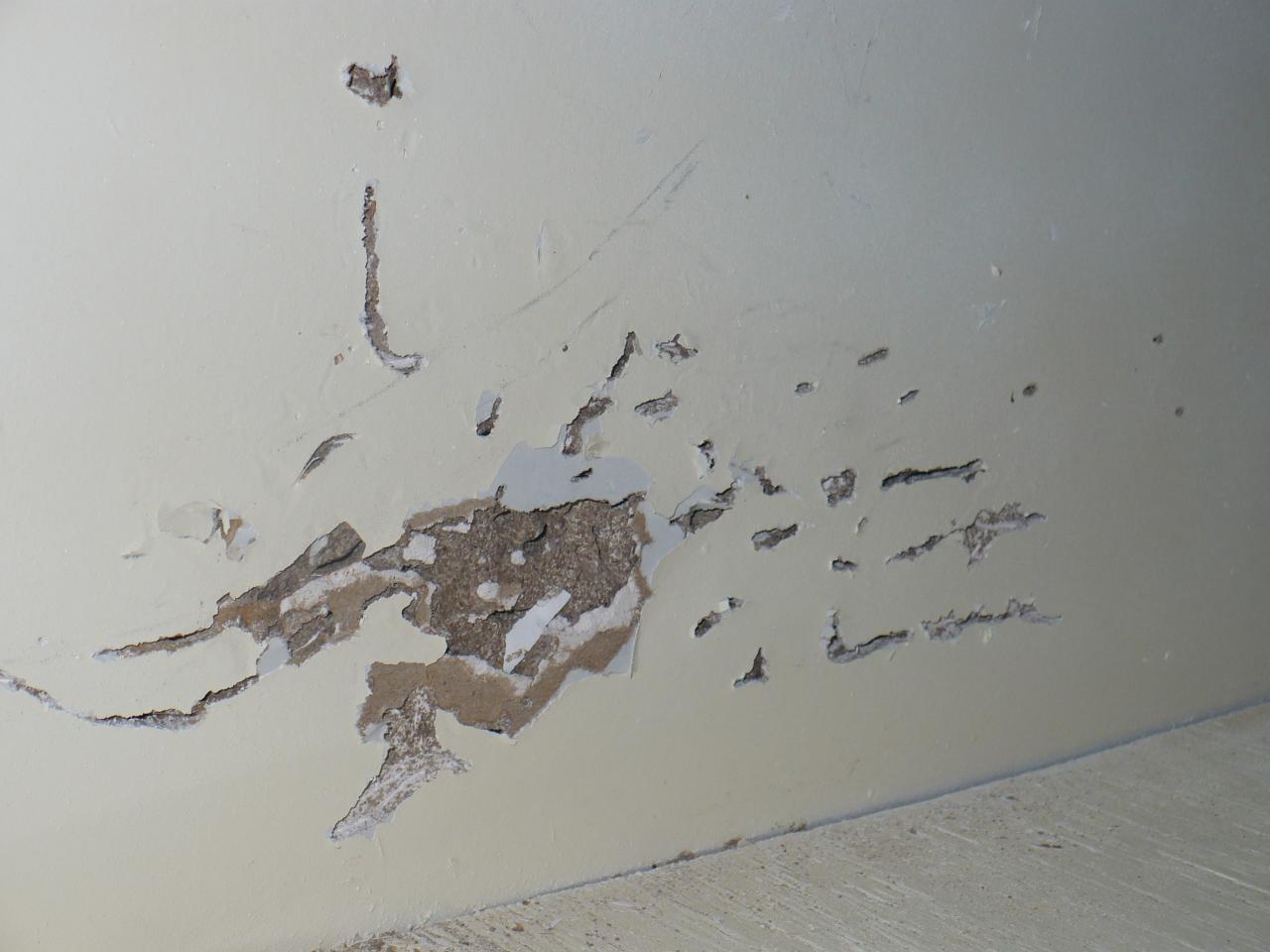 Sheet Rock Damaged by Termites