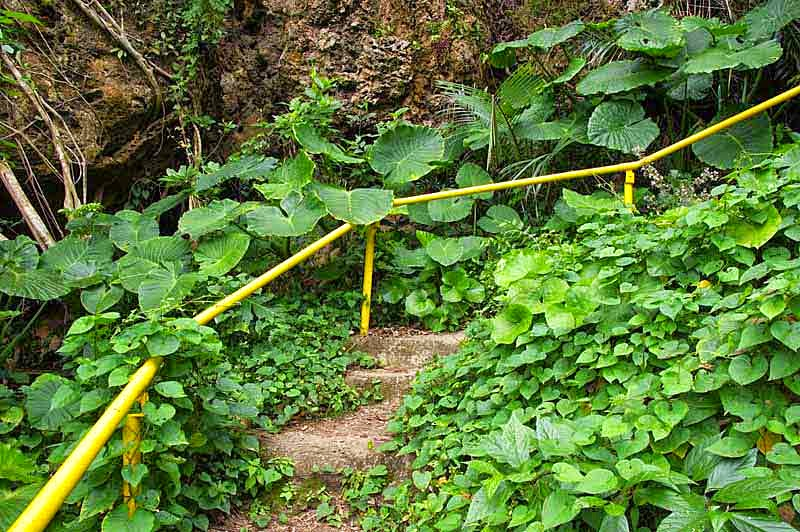 jungle, trail, stairs, yellow handrail