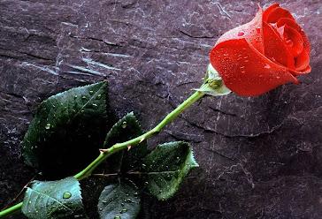 A beleza da flor ...