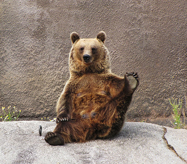 Funny bear doing yoga, bear in yoga pose, funny bear pictures, bear photos