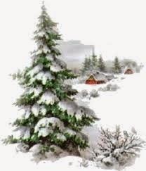 A fenyőfa