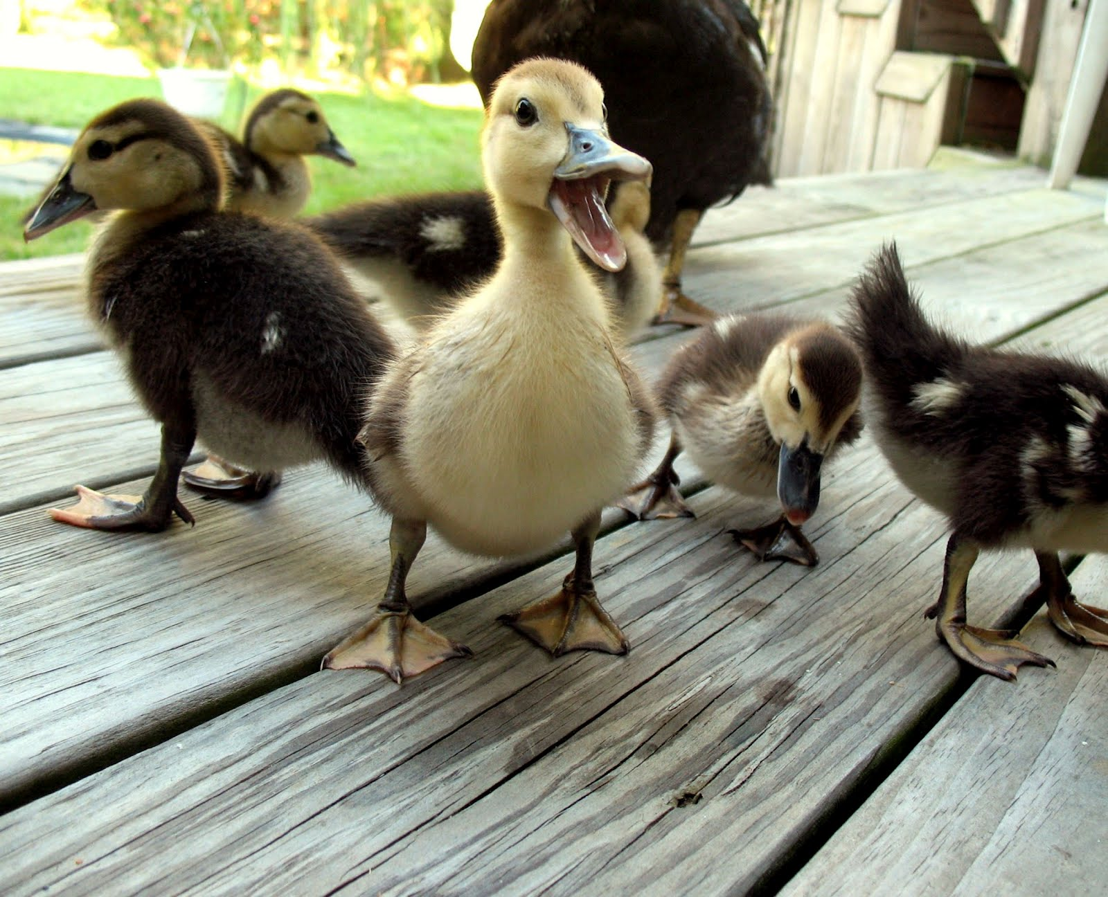30 extremely adorable baby animals 30 pics amazing creatures