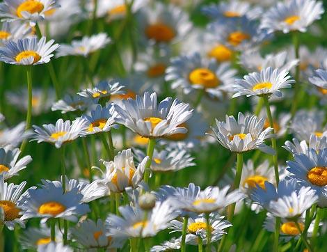 Inspira es de almas iluminadas feliz primavera for Immagini desktop primavera