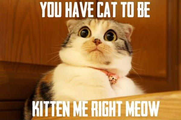 you-have-cat-to-be-kitten-me-right-meow.