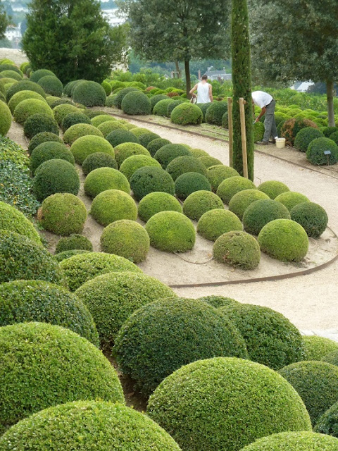 Um jardim para cuidar arbustos talhados ou o encanto da - Arbustos jardin ...