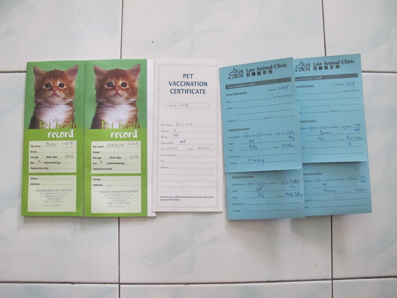 S C R A T C H Kenapa Kucing Perlu Vaksinasi