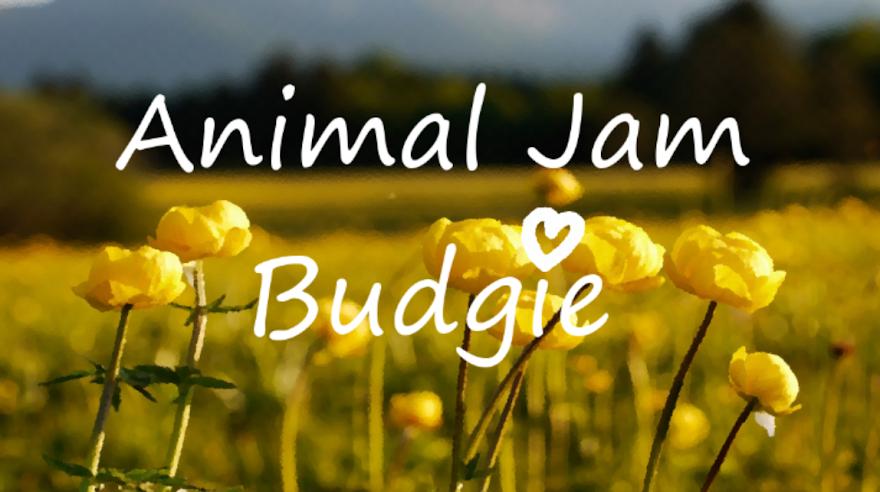 Animal Jam Budgie