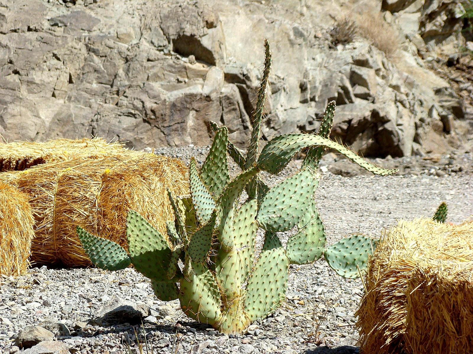 Desert Trees Names images