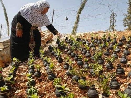 Muslimah Gaza ubah granat jadi pot bunga