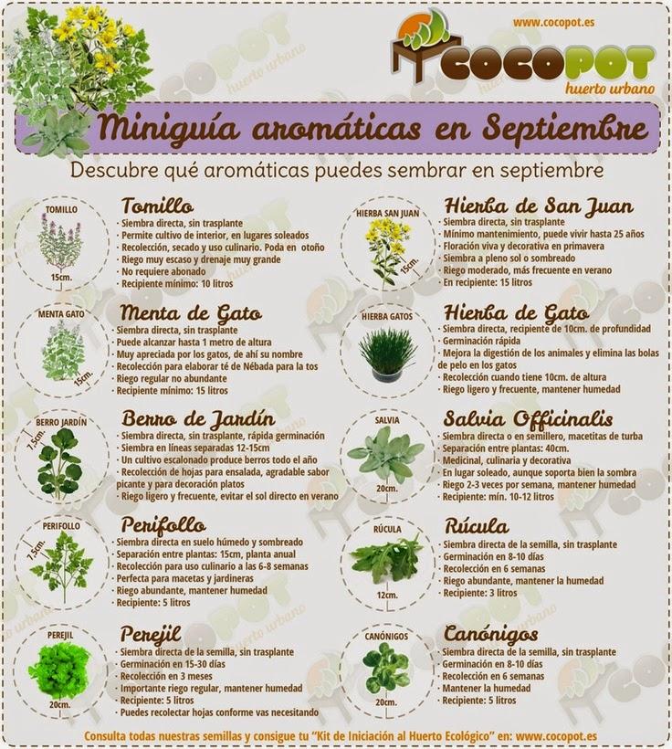 Huerto familiar en casa plantas arom ticas que se for Cultivo de plantas aromaticas y especias