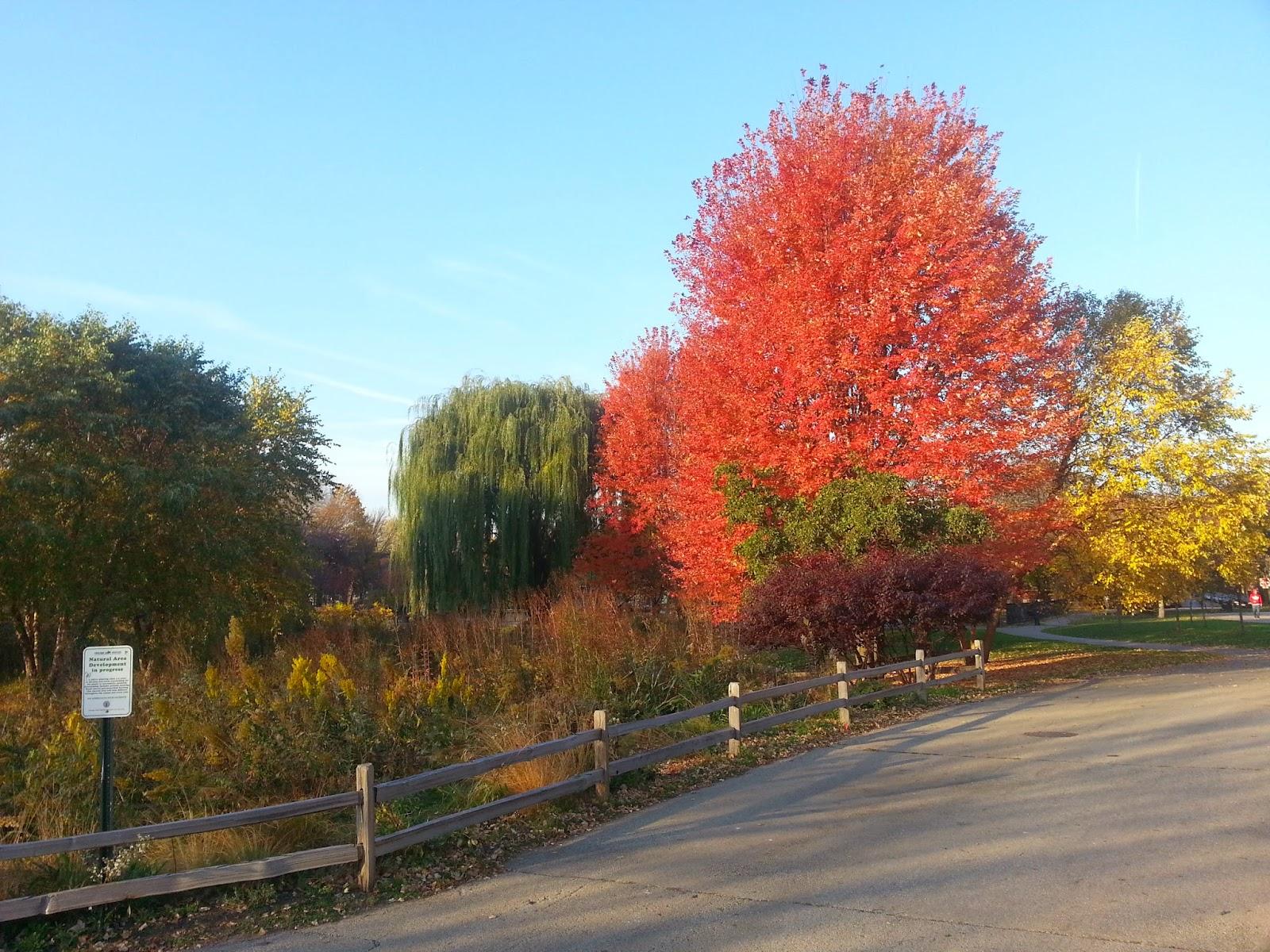 Resultado de imagen para Parque Winnemac fall
