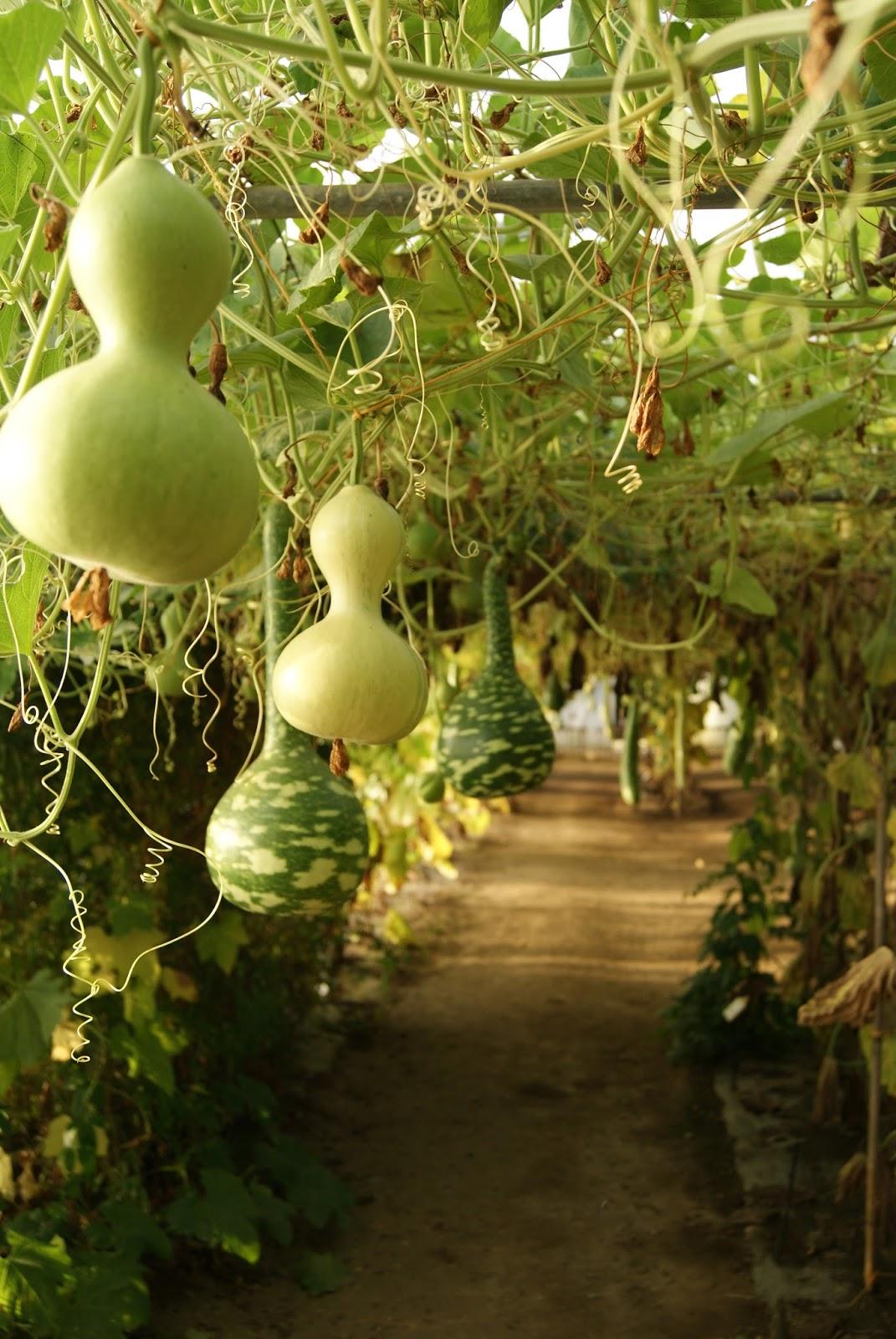 Breuillet nature le potager extraordinaire for Le jardin extraordinaire 09