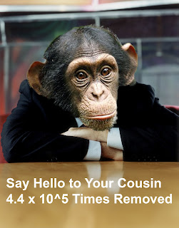 say hellow to your cousin 4.4 x 10^5  times removed, evolution, darwin, desk, chimp, monkey