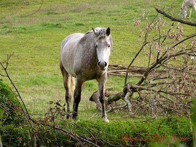 hiperica_lady_boheme_blog_cucina_ricette_gustose_facili_e_veloci_cavallo_nel_prato