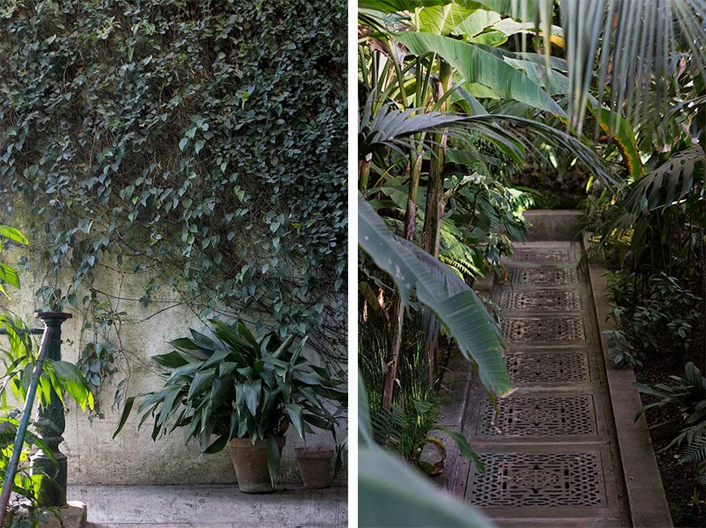 Estufa de las palmas botánico Madrid